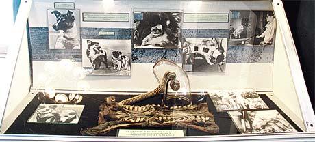 Отдельный стенд посвящен собакам-космонавтам (за стеклом - спецскафандр для четвероногих).