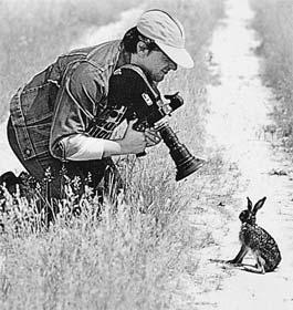 Остановился заяц и стал наблюдать: что будет?