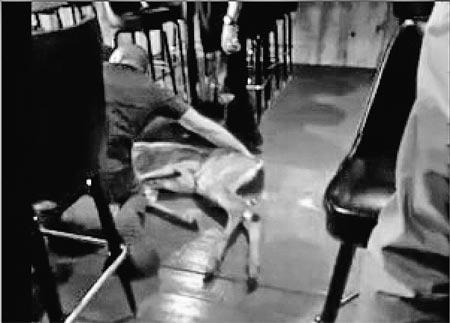 Если кто-то решил, что такого не может быть, то вот вам кадры видеозаписи: парнокопытные штурмом берут пивную, и их ловят посетители паба.