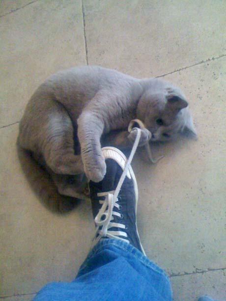 ...и любимым котом Северином.
