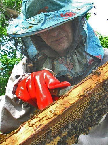 Пчелиных семей украли аж на 40 тысяч гривен! Фото из архива «КП».