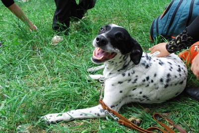 Приз зрительских симпатий получила самая артистичная собака Шарлотта, которая кроме запланированной полосы препятствий показала зрителям цирковой номер, чем очень порадовала малышню.