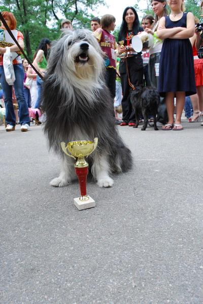 Гран-при и звание лучшей дворняжки Днепропетровска получил обворожительный пес Чарли.