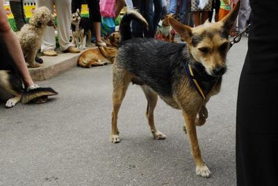 За самый лучший контакт с хозяином была награждена псина Мерси. И действительно, очень заметно, что хозяйка и собака понимают друг друга не то что с полуслова, а с полувзгляда.