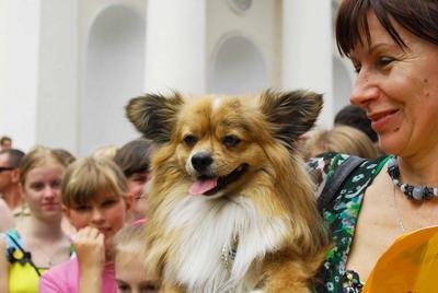 Обладателем самых очаровательных ушей признана собака Фокси. Лисьи ушки действительно достойны восхищения. Кроме того, Фокси с хладнокровием профессиональной модели позирует фотографам.