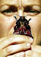 Отвратительные насекомые частенько достают горожан