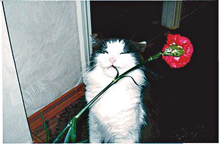 Самый прикольный кот - Маруся из Киева.