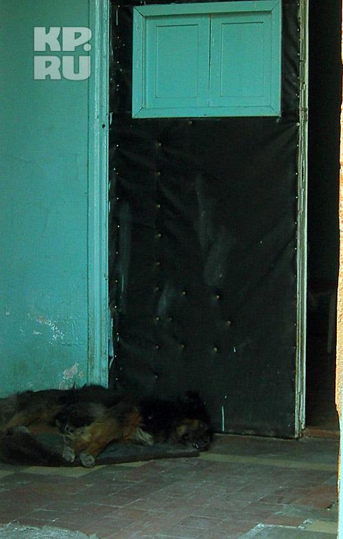 Собаки чувствовали себя в клинике весьма вольготно