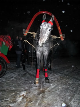 Конь Липецк - трехлетний орловский рысак, именно он провезет в коляске Леонида Черновецкого.