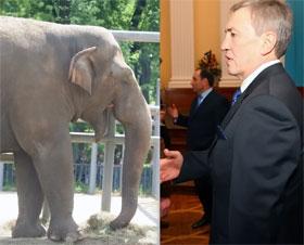 - Слон Вася, поздравляю тебя с 23 февраля!