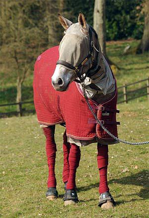 Никто и не подозревал, что у лошадки – аллергия на все виды травы, включая сено. Фото: Daily Mail