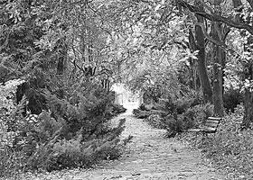 Малоизвестный лес раскинулся в самом сердце города.