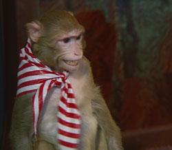 Экстрасенсы через стену смогли увидеть в соседней комнате обезьяну Асю.