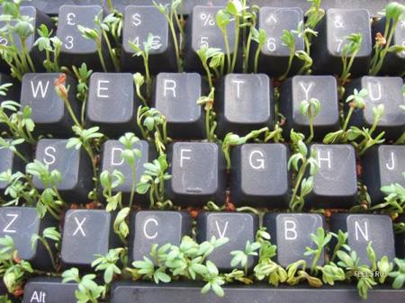 Пользуясь клавиатурой, стараемся не затоптать неокрепшую травку