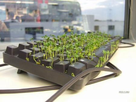 Собираем урожай. Употребляем в меру потребностей и воображения.