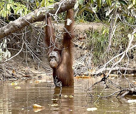 Река для обезьян еще и развлечение.