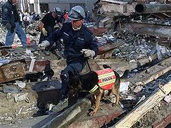 Пара Симингтон-Тракр приступила к работе после катастрофы 11 сентября одними из первых. Фото: АП.