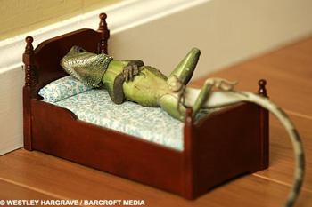 Хозяин уверяет, что ящеркам безумно нравится такая жизнь.