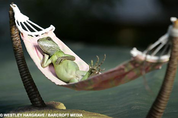После фотосессии стоит изрядных трудов попросить ящерицу вернуться к