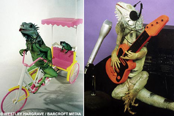 Ящерица-велорикша и рептилия-музыкант.