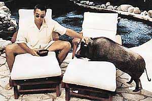 Кабанчик Макс был верным другом Клуни много лет.