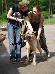 В Бородянке всего пара волонтеров. Они любят бездомных собак за весь Киев.