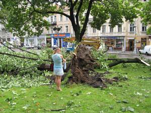 Весь город завалило сломанными деревьями.