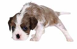 Когда-нибудь собак официально возьмут в штат работников поликлиник. Если, конечно, ученые безоговорочно докажут их эффективность.