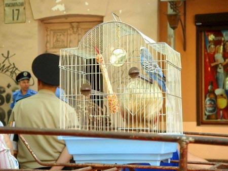 Говорящий попугай Гоша от пережитого онемел…