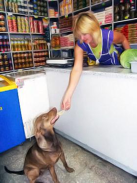 Дворняга приносит магазину прибыль от 10 до 30 гривен в день.