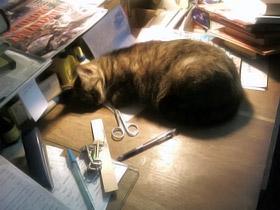 Кошки в библиотеке помогают детям чувствовать себя как дома.