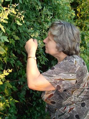 Пенсионерка вышла на охоту за пчелами.
