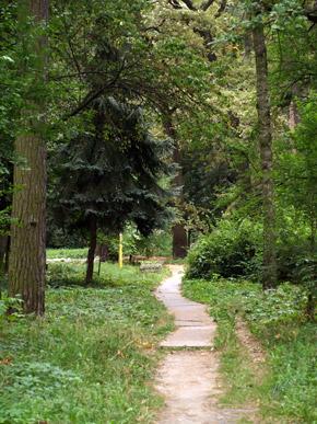 Заблудиться в ворзельском лесу - благодать.