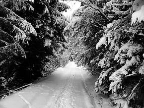 Зимние Карпаты - это сказка!