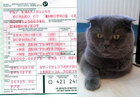 Жора улетел в собственном кресле. А как же! Вон, у хвостатого и билет свой (фото слева). В графе «имя» гордо красуется: «Ефимов/кот»!