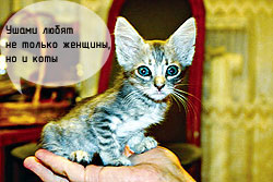 Самый прикольный кот: Буся-Вертолет (Симферополь)